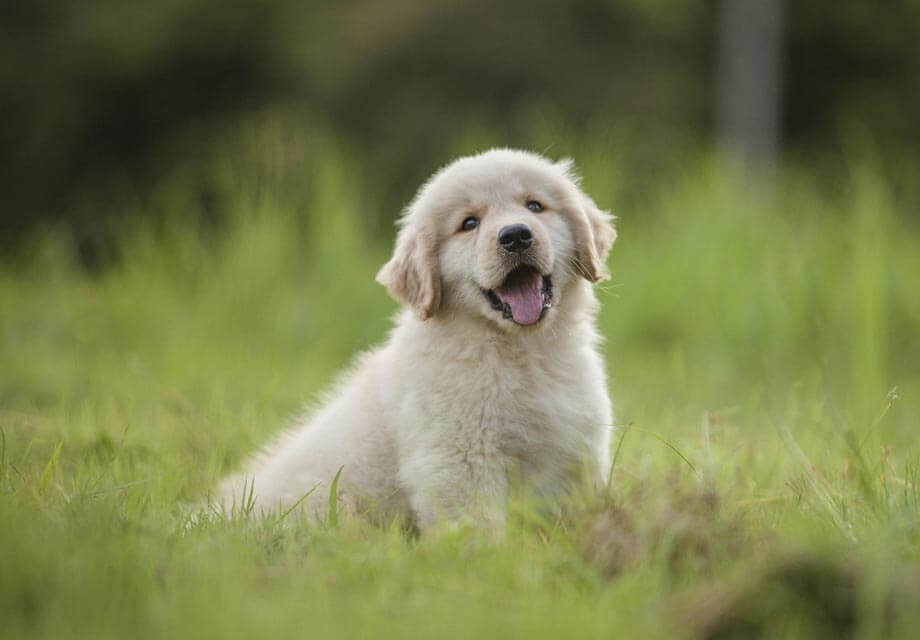 Cute Smiling Babies Wallpapers Top 10 Beautiful Dogs In The World Dogmal Com