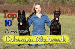 Small Of Are German Shepherds Good With Kids