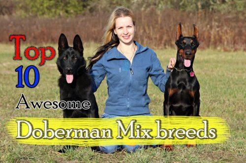 Medium Of Are German Shepherds Good With Kids