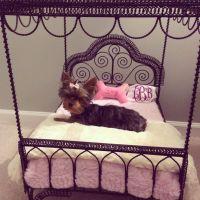 Dog Beds At Petsmart. Petsmart Dog Beds Coupons In ...