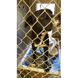 Small Crop Of Maricopa Animal Care And Control