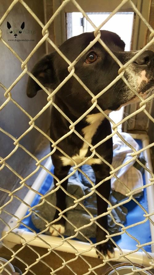 Medium Of Maricopa Animal Care And Control