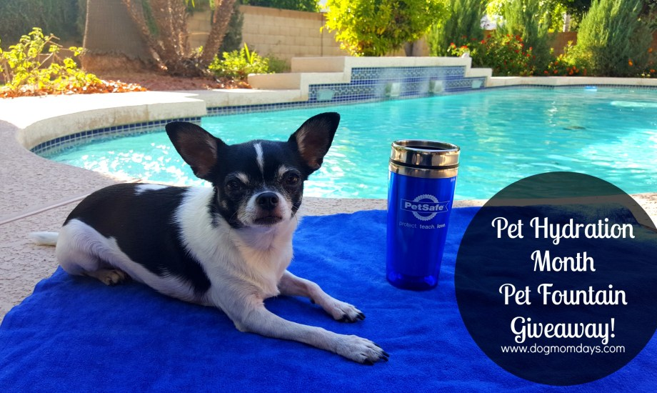Celebrating Pet Hydration Month With A Pet Fountain #Giveaway!