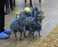 ridiculous costumes - Dog Pictures