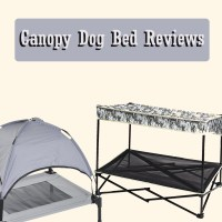 Canopy Dog Bed Reviews