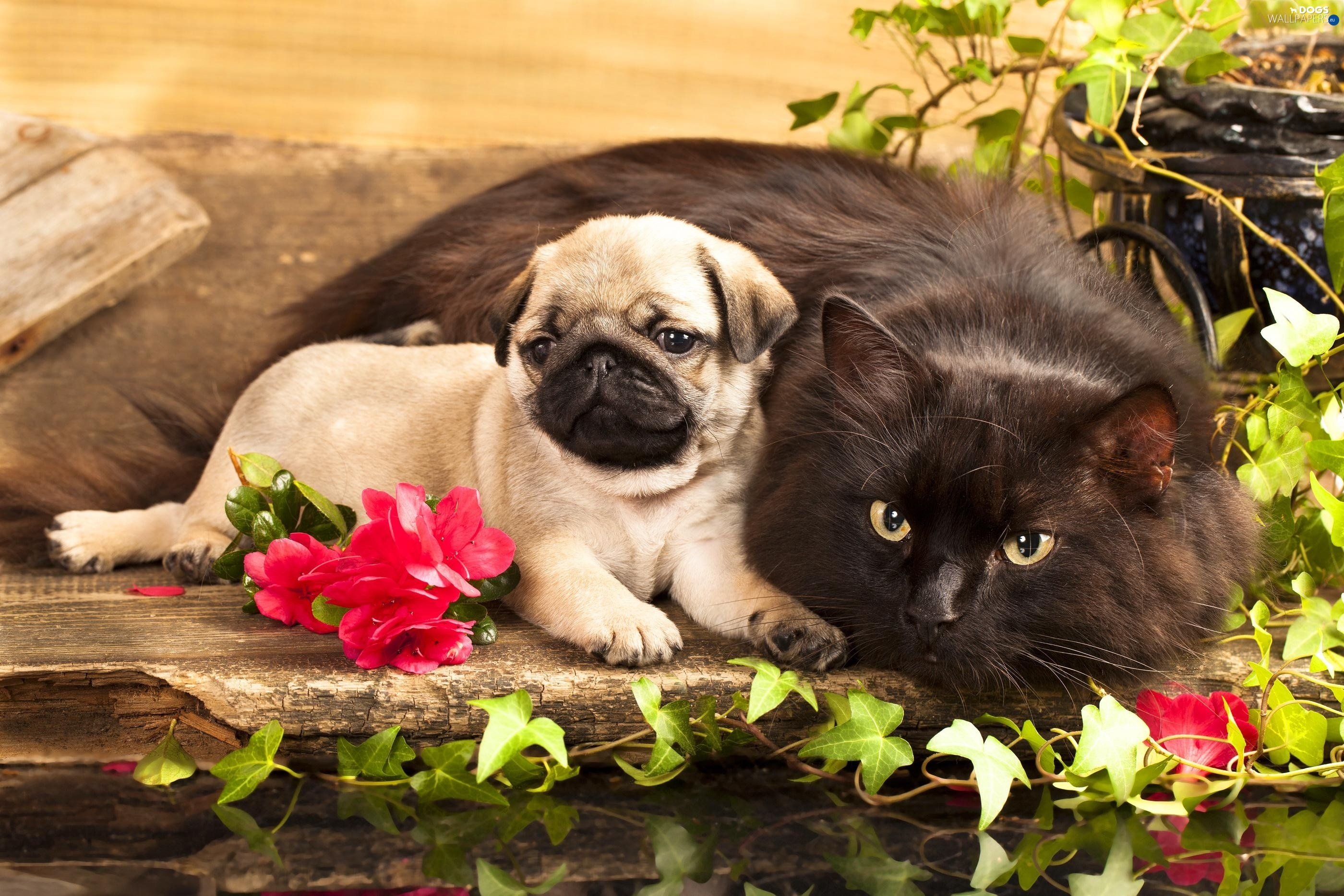 Cute Dog Wallpaper Backgrounds Puppy Flowers Cat Dogs Wallpapers 2800x1867