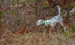 Setter Club of New England Spring 2016 trial