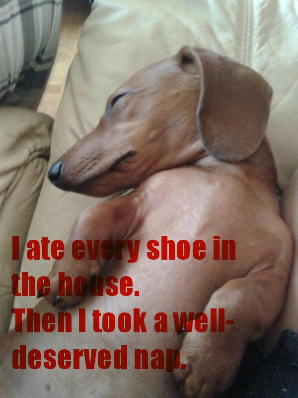 Ate Every Shoe In The House Cant Punish Him