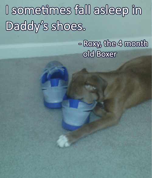 I Sometimes Fall Asleep In Daddys Shoes