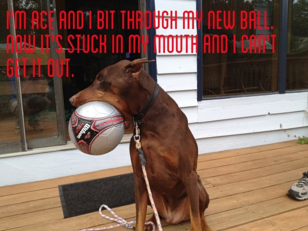 My Humans Had To Cut The Ball Open And Let The Air