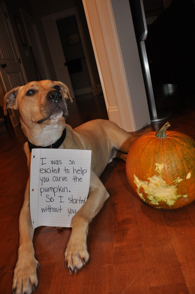I Was So Excited To Help You Carve The Pumpkin So