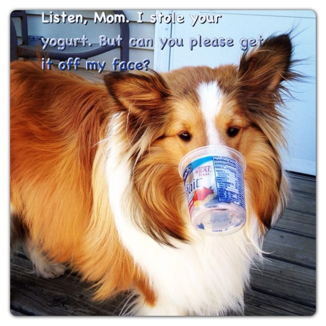 Listen Mom I Stole Your Yogurt But Can You