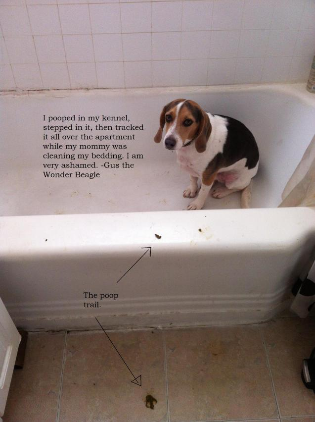 Gus-Dog-Shaming