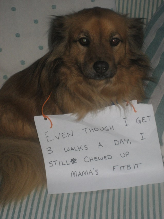 Dog-Shaming-Bert