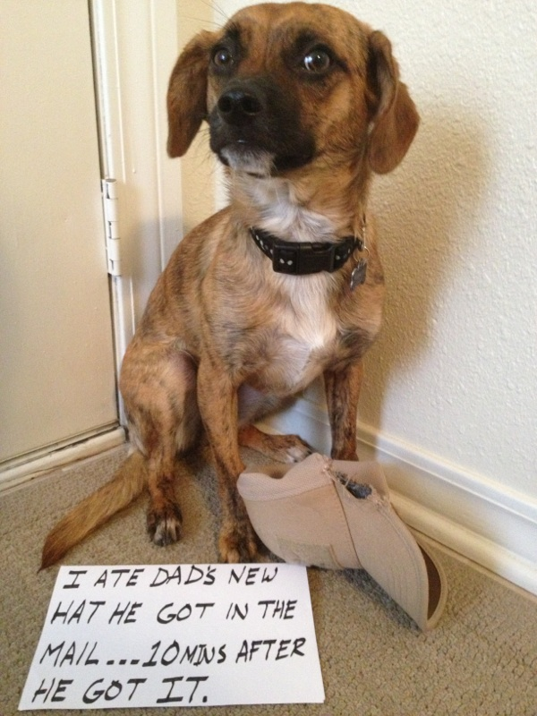 Edee-dogshaming