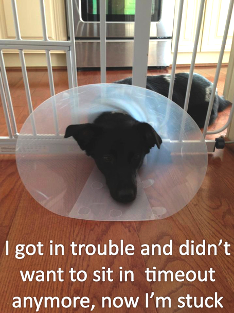 dogshaming10