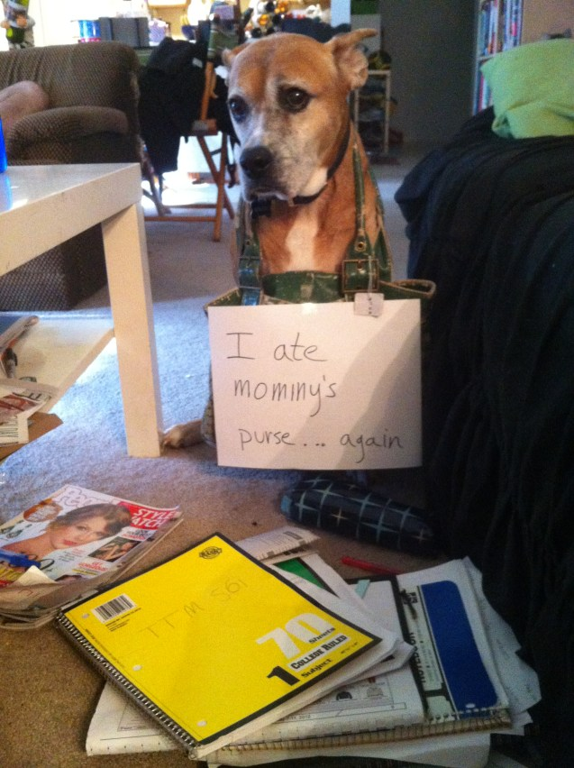 DogShame2