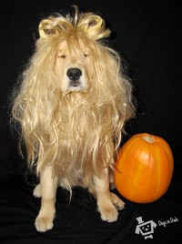 A Cowardly Lion  Dogs In Duds