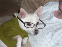 Dogs Dressed up op FUNDALIZE.com