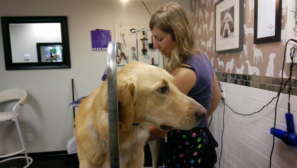 Pro Tips For Diy Dog Grooming Dogster