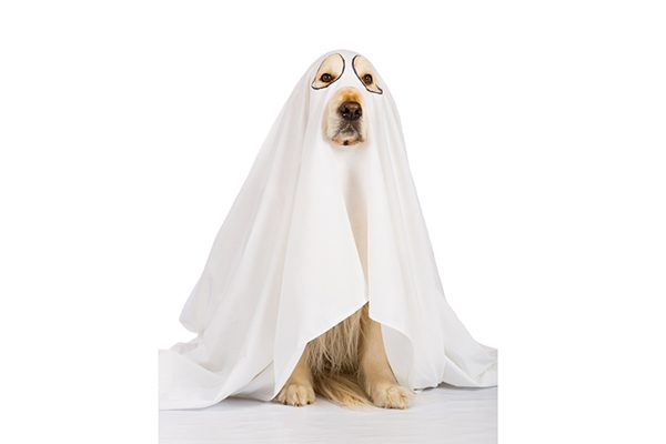 Are These Halloween Dangers for Dogs Lurking in Your Home?