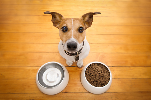 Dog Feeding Schedule How Many Times a Day Should I Feed My Dog?