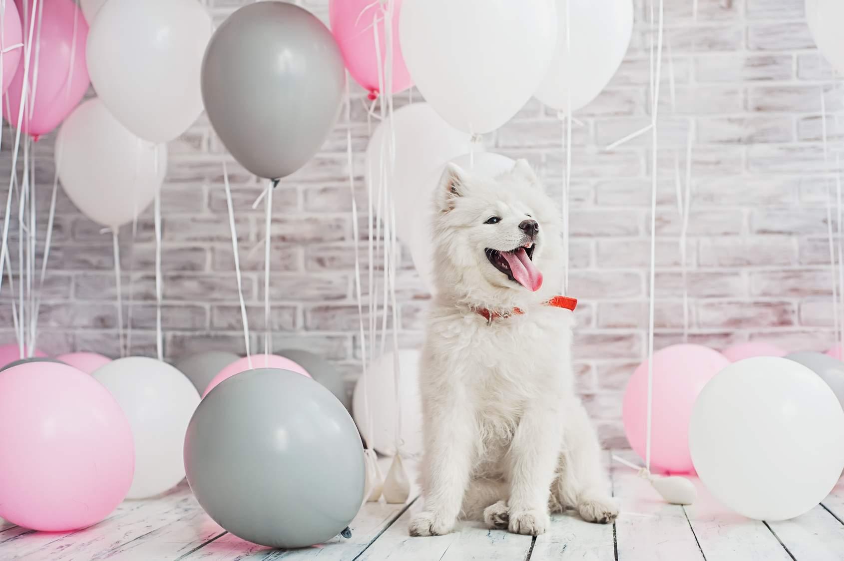 Dogtopia Birthday Paw-ties!
