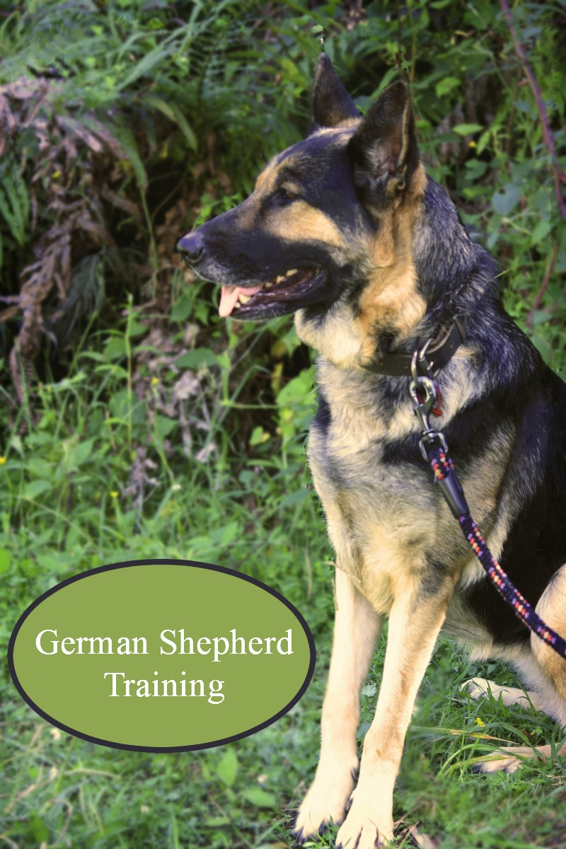 Large Of How To Train A German Shepherd Puppy