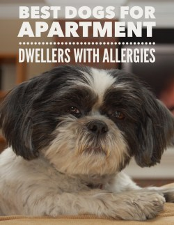 Small Of Best Apartment Dogs