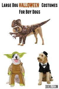 Large Dog Halloween Costumes for Your Handsome Fella