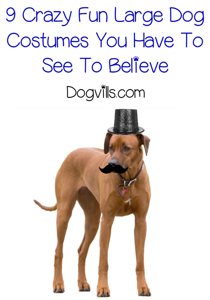 9 Crazy Fun Large Dog Costumes You Have To See To Believe