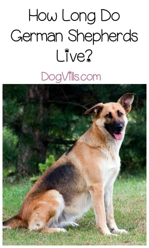 Medium Of Longest Living Dogs