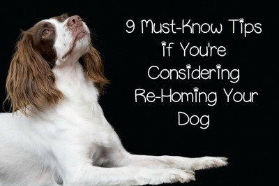 9 Must-Know Tips if You're Considering Re-Homing Your Dog - DogVills