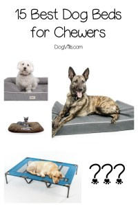 15 Best Dog Beds for Chewers - DogVills
