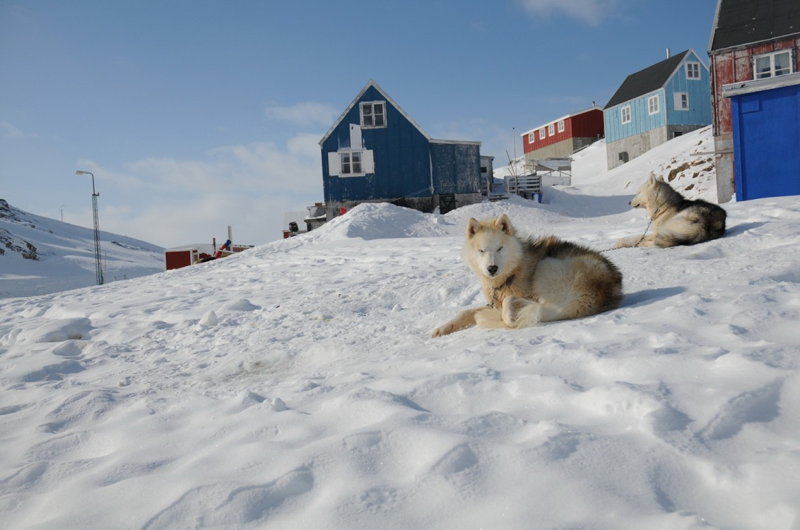 Sweet Cute Baby Wallpapers Greenland Dogs On The Mountain Photo And Wallpaper