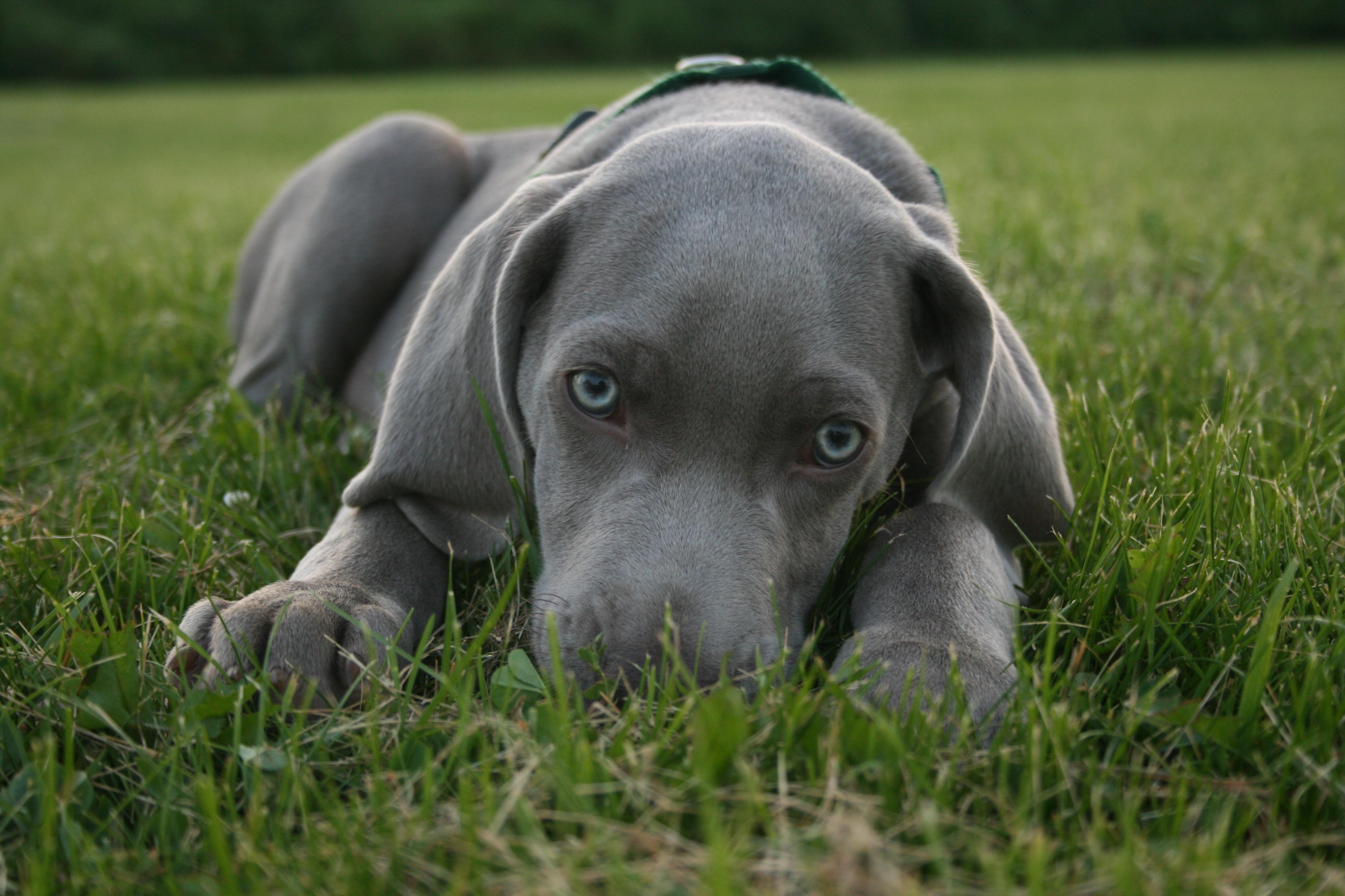 Fullsize Of Blue Eyed Dogs