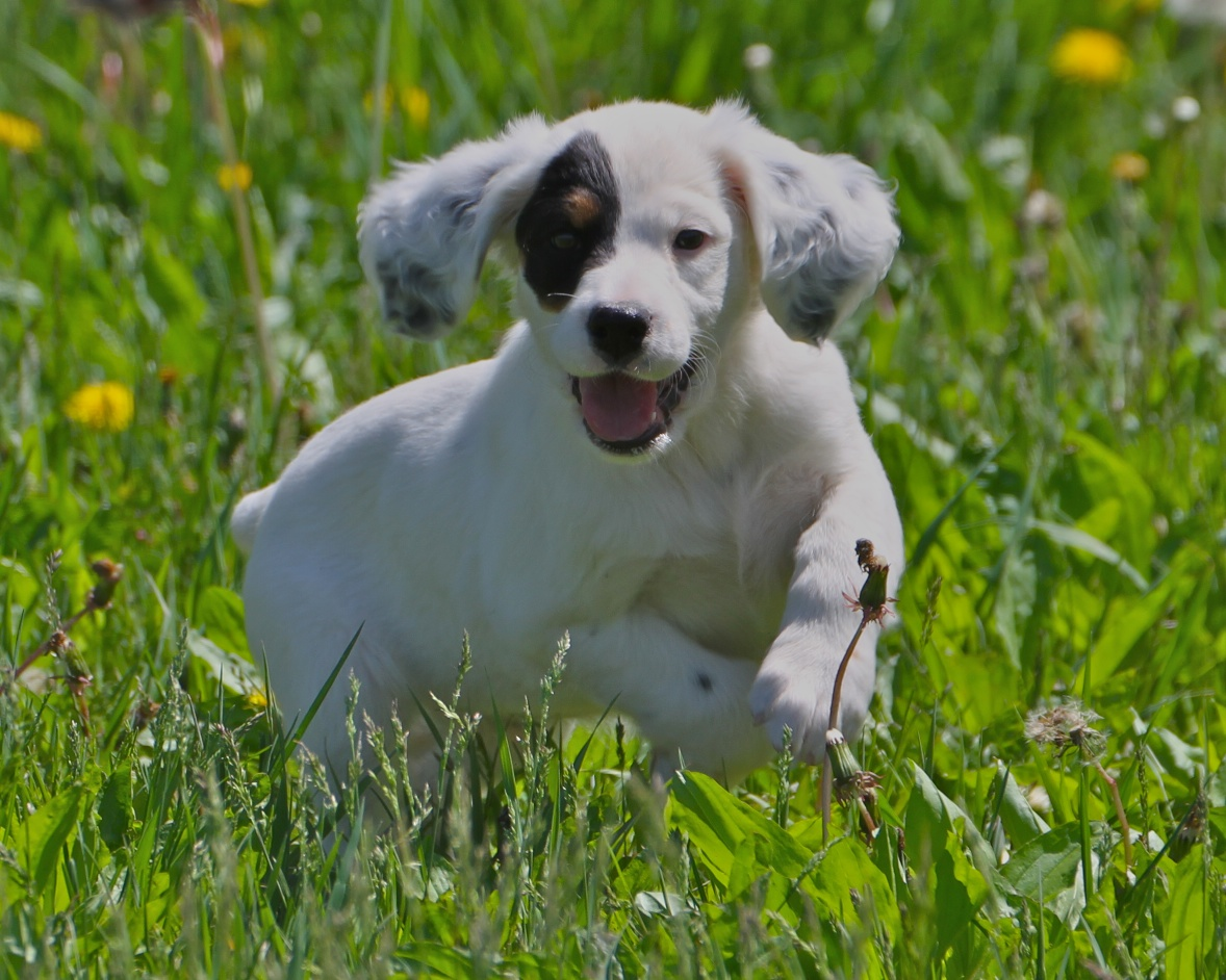 Cute Letter M Wallpaper Small English Setter Dog Photo And Wallpaper Beautiful