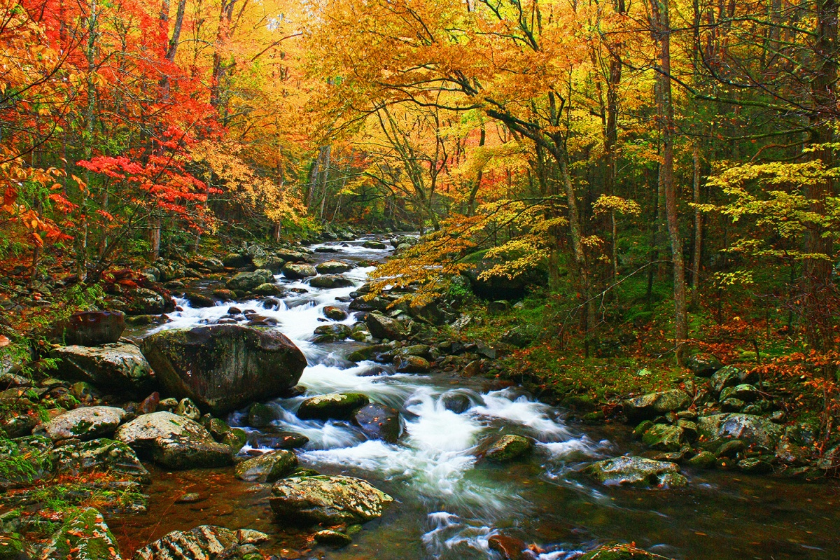 Kentucky Fall Wallpaper 2017 13 Remarkable Trees To See On Public Lands U S