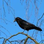 लालची कौआ और कबूतर की कहानी Hindi story on greed