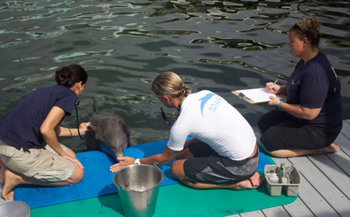 Dolphin Veterinary Internship in Key Largo Dolphins Plus