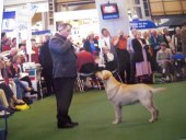 Arwyn at Crufts 1998 with Dolwen Thomas Charles