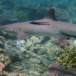 Trouble on Tubbataha Reef – Palawan