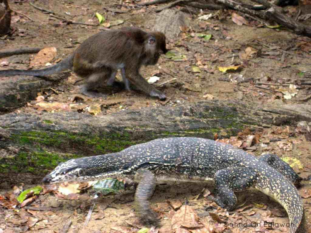 monkey-monitor-lizard-underground-river