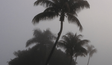 Foggy Florida