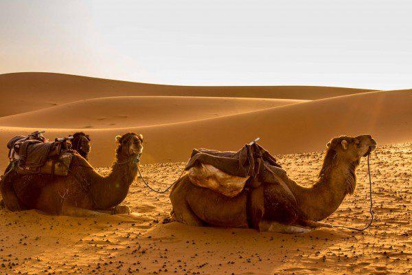 deserto do sahara_-13