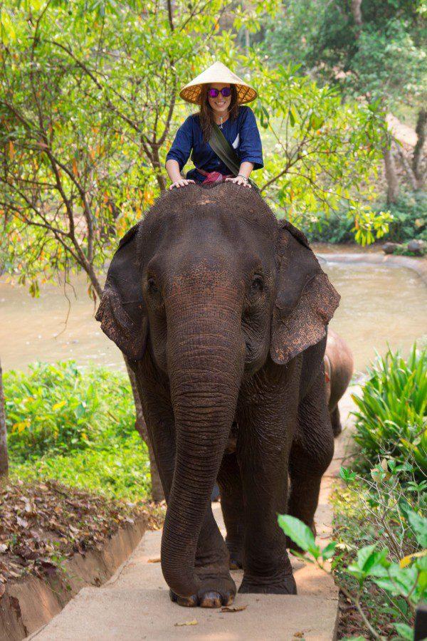 elefante_