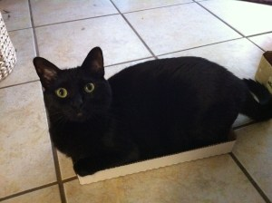 My cat in a box that's much too small for her.