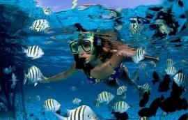 snorkeling surface