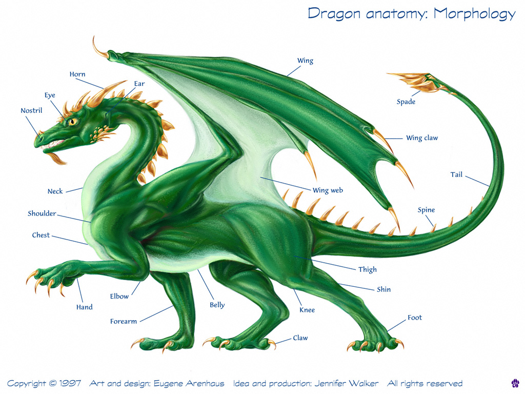 Dragon Physiology Here Be Dragons Draconiancom