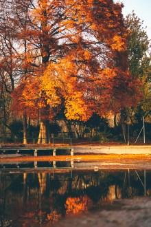 Toamna în București -Parcul Cișmigiu